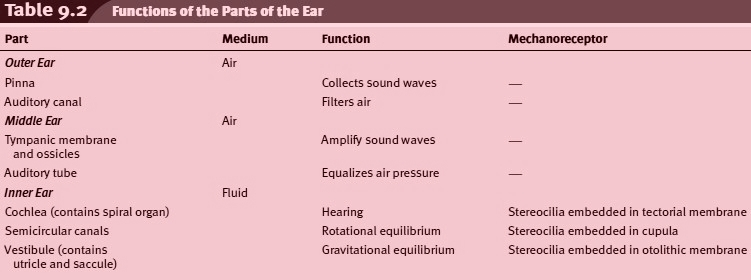 Functions of the Parts of the Ear