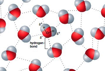 Hydrogen bonding between water molecules