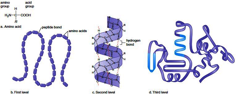 Levels of polypeptide structure