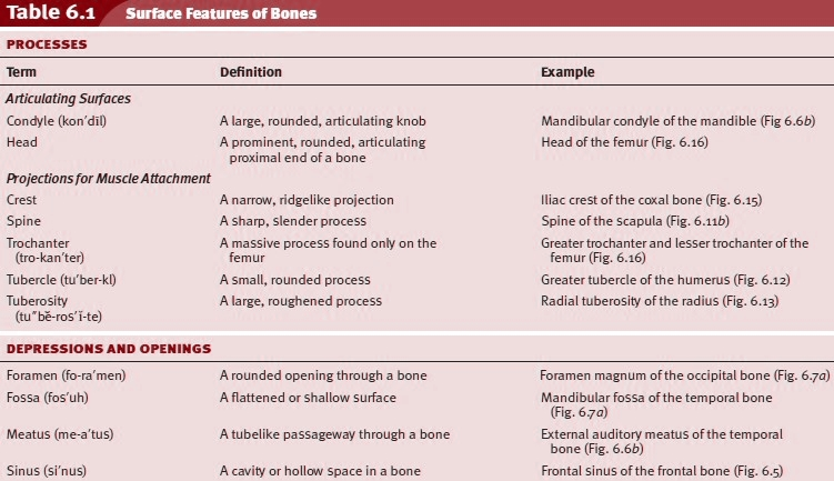 Surface Features of Bones