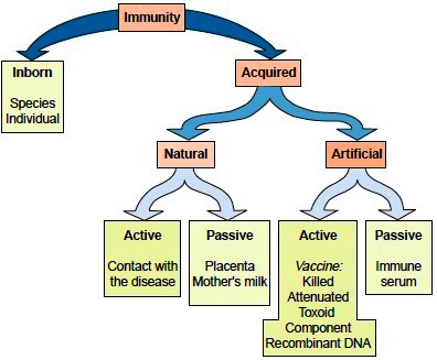 Immunity. Types of Immunity. Antigens